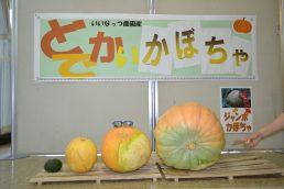 本日入荷  ジャンボかぼちゃ!
