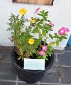 南中生から感謝のお花🌼
