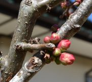 春いちばんが色っぽく…