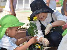幼児園と公民館もきれいな花が増えました🌼