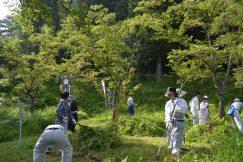 熱中症注意報の中☀草刈り整備作業