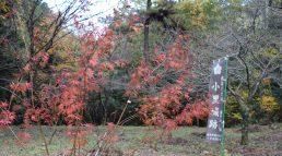 小里城跡 御殿場の秋