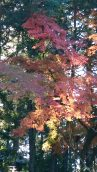 三連休は紅葉真っ盛り