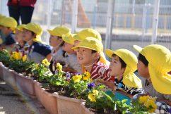 秋の花いっぱい運動🌼 幼児園編