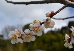 かわいい春があちこちに!
