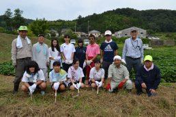高校生ボランティア、里芋畑がすっきり!