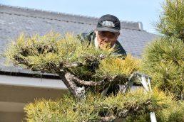 松の木の剪定 ありがとうございます!