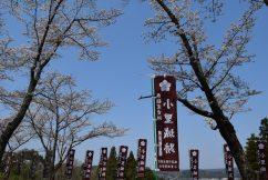 桜満開🌸小里城跡整備作業 祈願祭