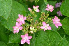 梅雨空を彩る花たち