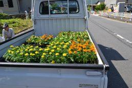 花いっぱい運動 春の花植え
