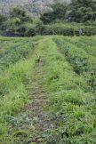 農園の草刈り