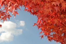 まっかな秋みーつけた!