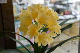黄色い花がお出迎え