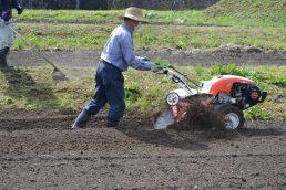 いいなっつ農園 さつまいも苗植え準備
