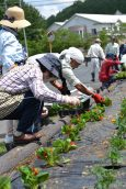 春の花いっぱい運動