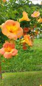 梅雨明けのギラギラ太陽にオレンジ眩し!