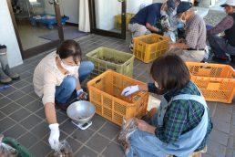いいなっつ農園収穫野菜 出荷作業に追われる!